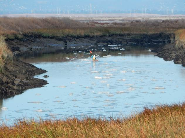 Monitoring Restoration in South San Francisco Bay Oct 1. 2016